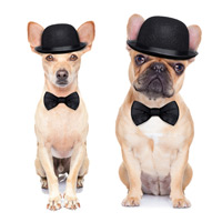 Dogs in bowler hats