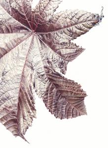 Rici nus communis, Watercolour on paper, 56 x 76 cm