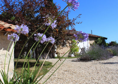 French_Retreat__0022_agapanthus