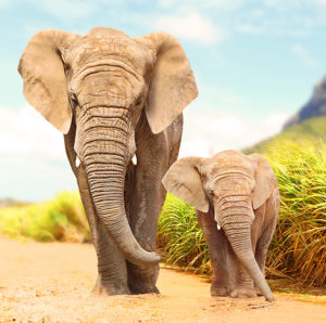 Adult elephant and child elephant