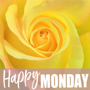 Yellow rose with Happy Monday text