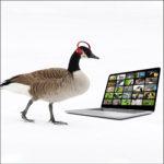Goose attends a webinar