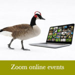 Zoom online events