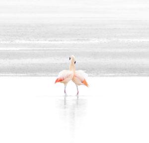 A pair of happy flamingos