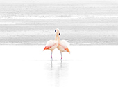 A pair of happy flamingos